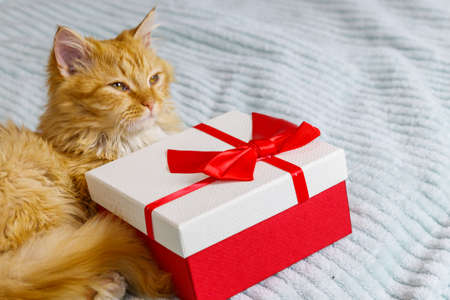 Ginger cat with gift box on a bed 免版税图像