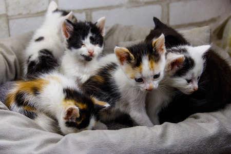 Little kittens sitting in a cat bed