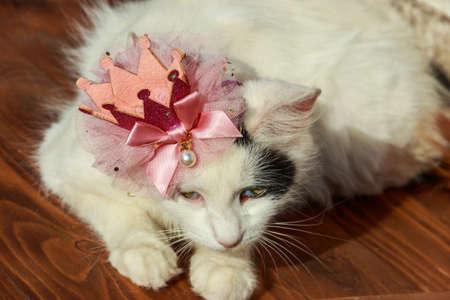 Portrait of beautiful cat  wearing crown