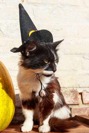 Beautiful cat wearing witch hat for halloween Фото со стока