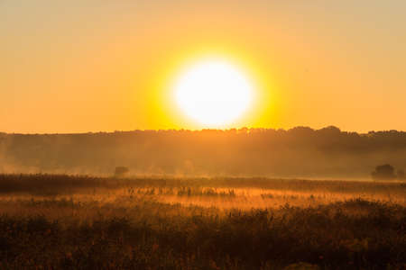 Beautiful sunrise over a foggy meadow Фото со стока