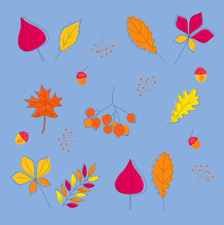AUTUMN LEAVES hand drawn set, isolated on white background. Fall of the leaves. Simple cartoon flat style.