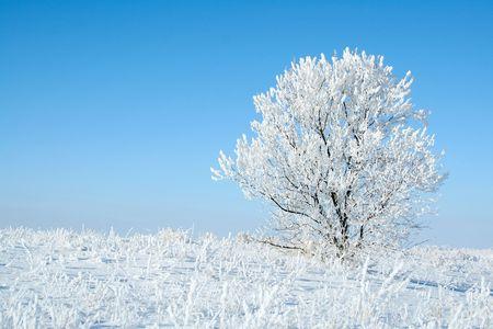 Alone frozen tree. white winter Standard-Bild