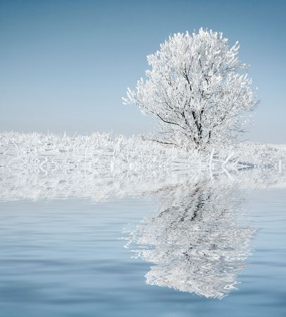 Alone frozen tree with reflection. white winter Stock Photo - 2491329
