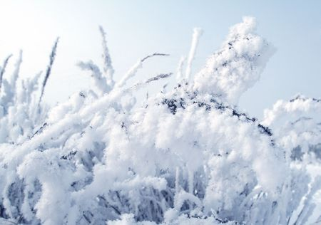 plant in snow blue toned Stock Photo - 2496750