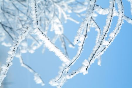 Tree in snow blue toned Stock Photo - 2496749