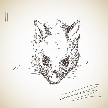 possum: Vector sketch possum muzzle Illustration
