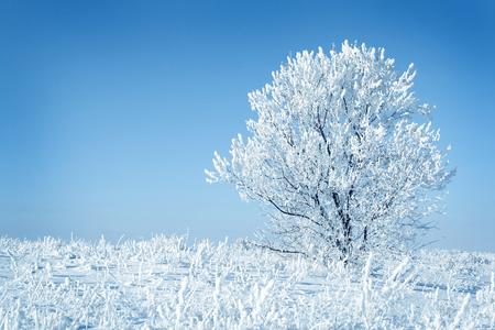 blue  toned: Alone frozen tree blue toned. white winter
