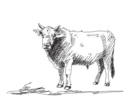 Hand getrokken stier Stock Illustratie