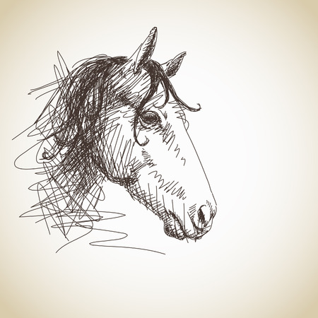 equine: Hand drawn horse portrait