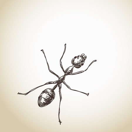 crawly: Hand drawn ant