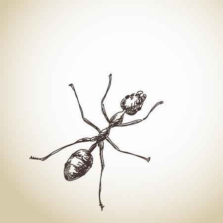 pismire: Hand drawn ant