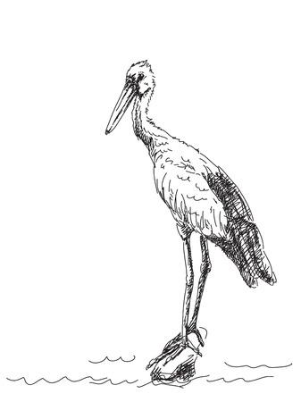 egret: Sketch of heron bird Vector