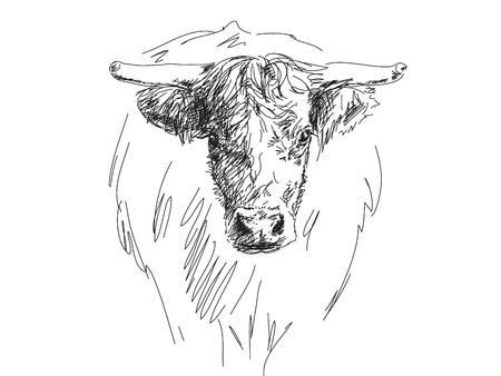 Sketch of bull head Vector