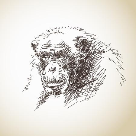 Sketch of chimpanzee head Vector illustration Illustration