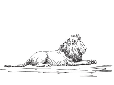 Lion resting Vector sketch