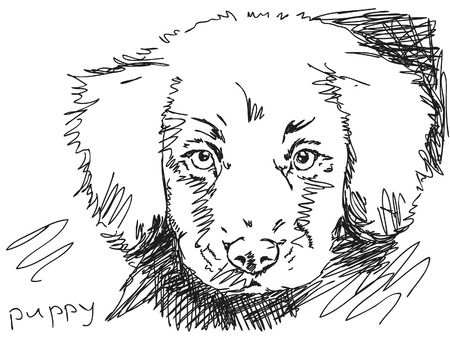whelps: Hand drawn puppy dog Illustration