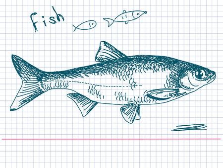 sail fin: Hand drawn fish Vector