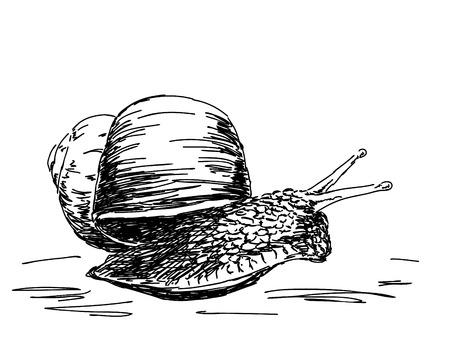 slow motion: Hand drawn snail