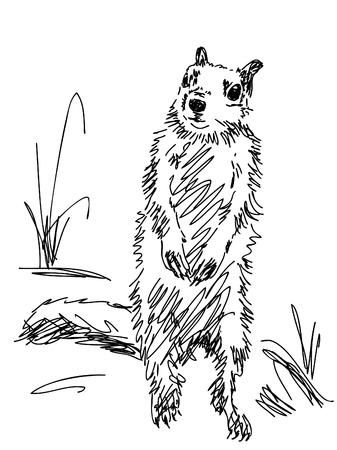 marmot: Hand drawn marmot