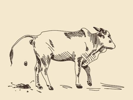 Hand drawing zebu cow in action Vector