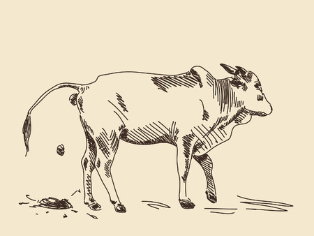 manure: Hand drawing zebu cow in action