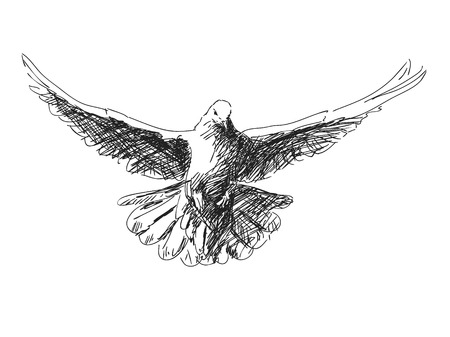 Hand getekende duif