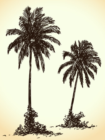 tree sketch: Hand drawn palm trees