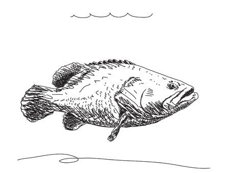 fish tail: Hand drawn fish