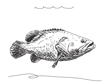 escamas de peces: Pescado Dibujado a mano