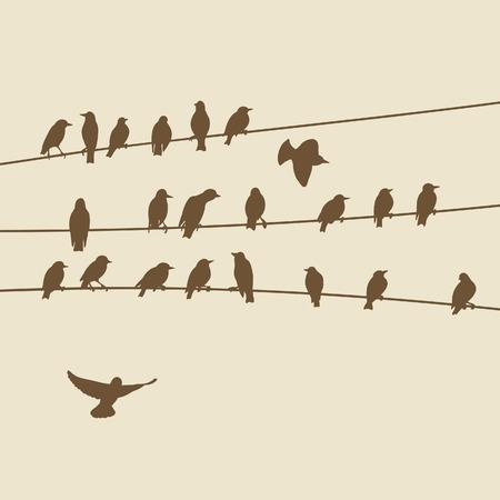 bandada pajaros: pájaros en los alambres
