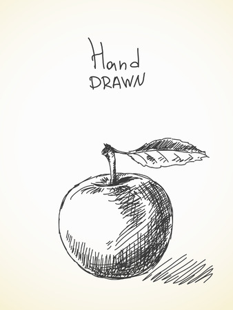 manzana: Dibujado a mano dibujo de la manzana