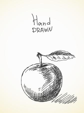 apfel: Hand gezeichnete Skizze der Apfel Illustration