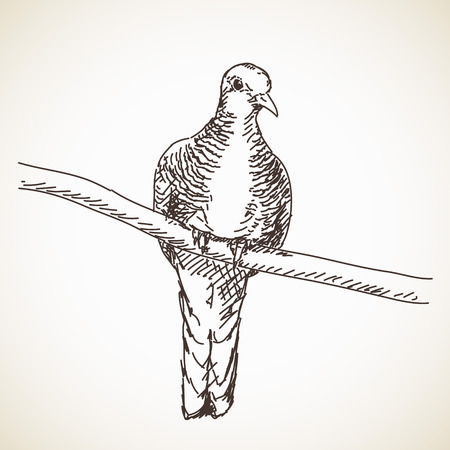 Sketch of turtle dove bird drawn illustration Ilustração