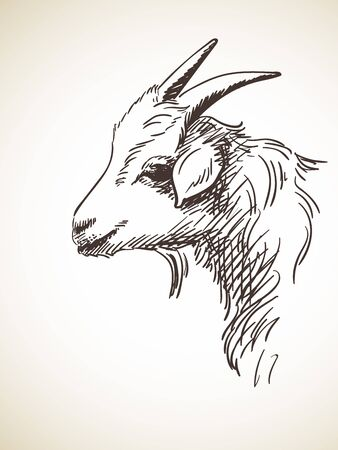 Sketch of goats head, Hand drawn illustration Isolated