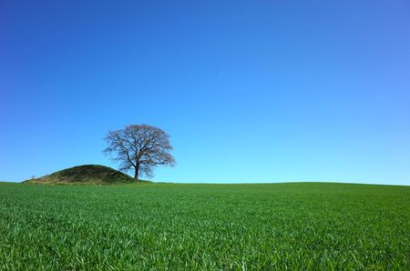 Perfect nature background, Fresh green wheat field and lonely tree next to ancient viking burial hill under clear blue sky, south Sweden Banco de Imagens