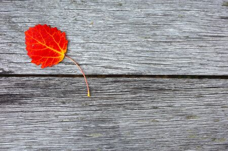 Autumn red leaf over old wooden background with copy space Banco de Imagens - 127345334
