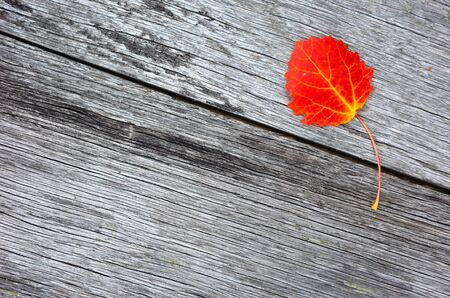 Autumn red leaf over old wooden background with copy space Banco de Imagens - 127345336