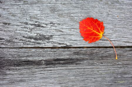 Autumn red leaf over old wooden background with copy space