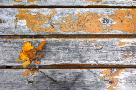 Autumn yellow oak leaves over old wooden background with copy space
