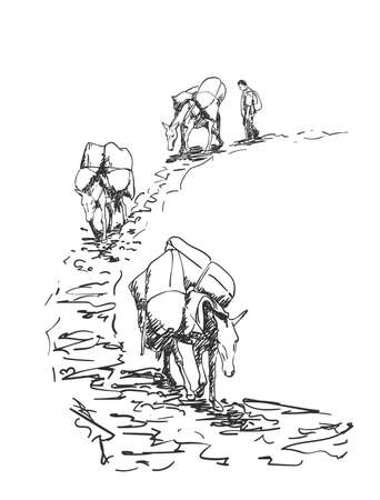 Mule caravan walking in mountains with load on back, This type of cargo transport widely used in himalayas, Vector sketch, Hand drawn illustration Illustration