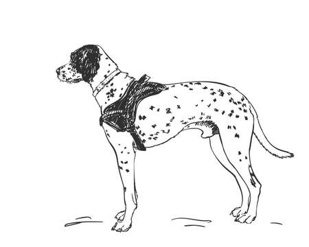 Dalmatian dog vector drawing. Standing side view sketch. Hand drawn pet illustration isolated black and white