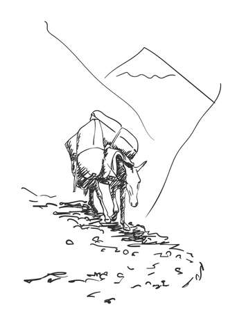 Mule walking in mountains with load on his back, This type of cargo transport widely used in himalayas, Vector sketch, Hand drawn illustration
