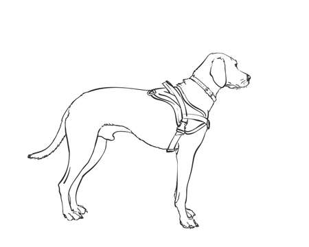 White dog vector drawing. Standing side view sketch. Hand drawn pet illustration isolated black and white Illustration