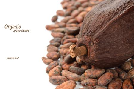 cacao beans: Los granos de cacao en el fondo blanco