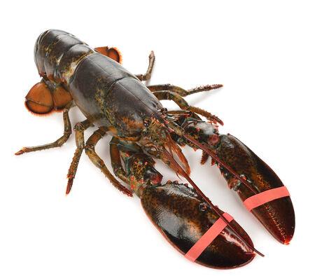 raw lobster: Langosta sin procesar aislado en el fondo blanco