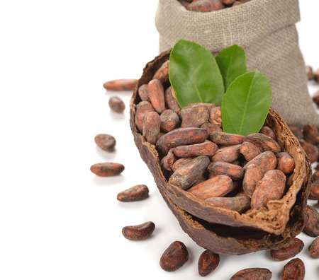 cocoa beans: Natural cocoa beans on white background Stock Photo