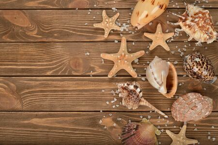 seashell: Variety seashells on a brown background, top view