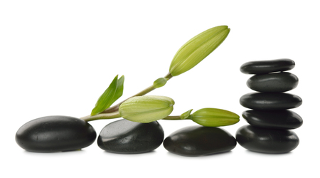 rock stone: Massage stones and lily bud isolated on white background