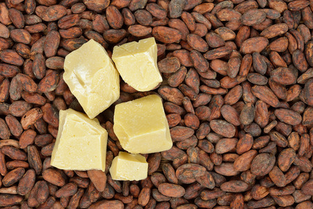 cacao beans: Organic cocoa butter and cocoa beans Foto de archivo